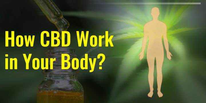 Is The Effect Of All CBD Oils The Same On Your Body?